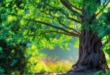 Магия деревьев. Деревья доноры